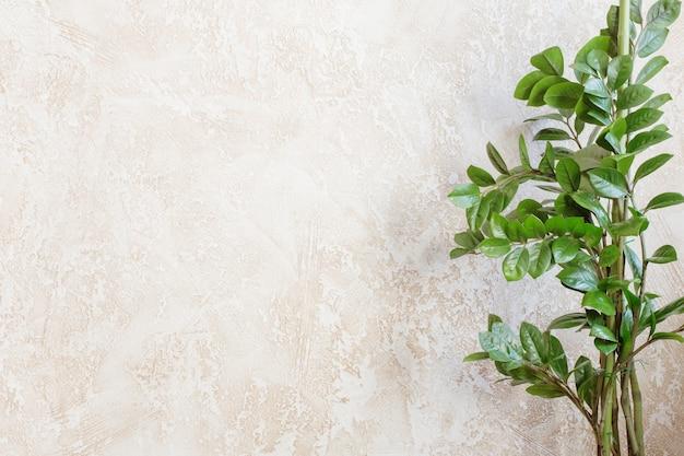 배경 벽에 zamioculcas의 가지에 녹색 잎