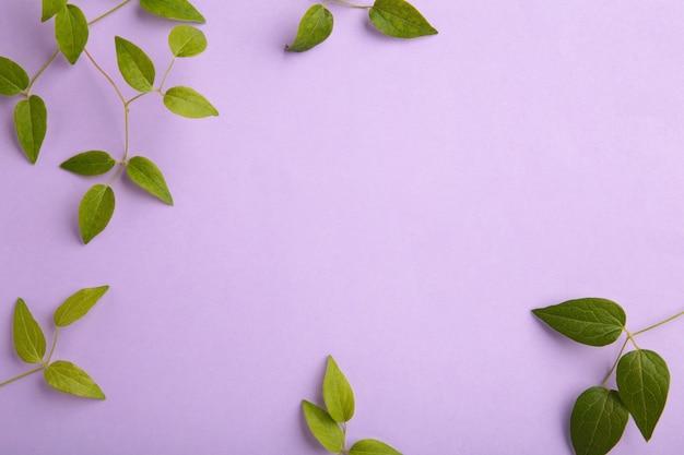 コピースペースと紫色の背景に緑の葉。上面図