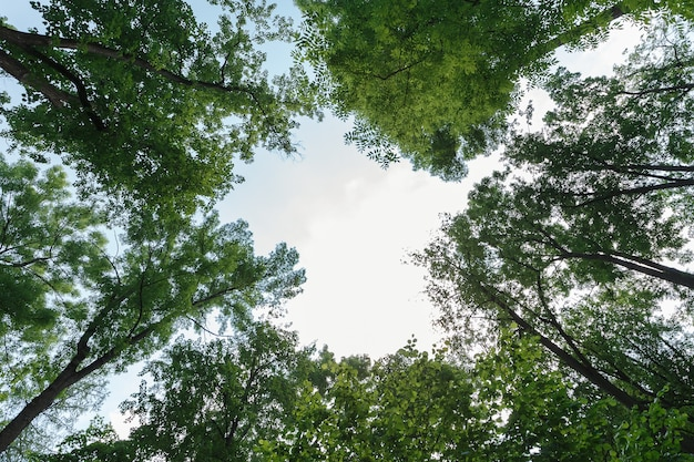 Зеленые листья на небе посреди сердца
