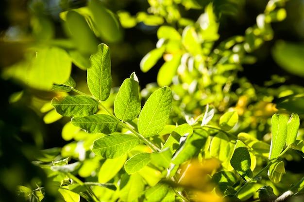 Зеленые листья на деревьях