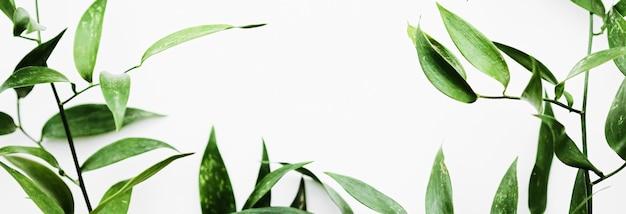 植物フレームフラットレイエコデザインと春の自然フラットレイ共同として白い背景に緑の葉...