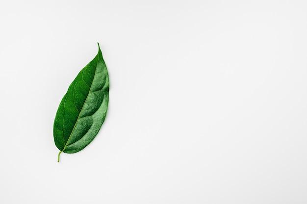 Зеленые листья на белом столе.