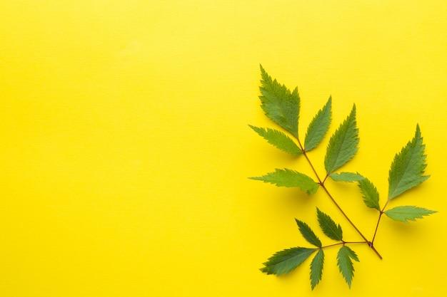 黄色の背景に緑の葉。夏のコンセプトです。フラットポジション、上面図、コピースペース