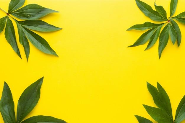 黄色の背景に緑の葉。夏のコンセプトです。