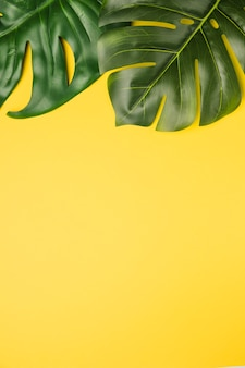 Green leaves on orange background