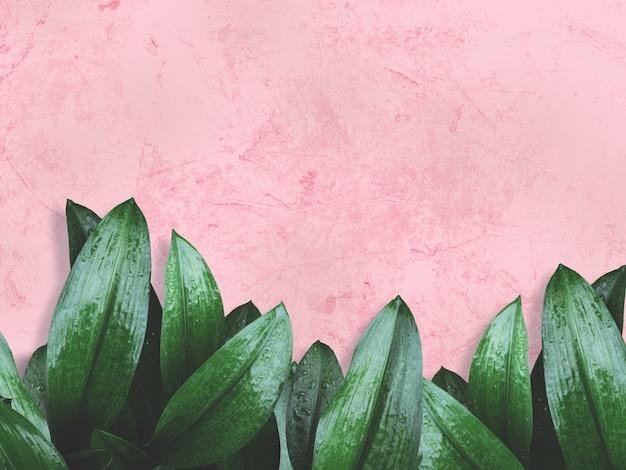 핑크 페인트 그런지 콘크리트 벽 위에 녹색 잎