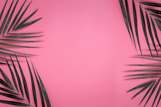 Green leaves of palm tree on bright pink pastel