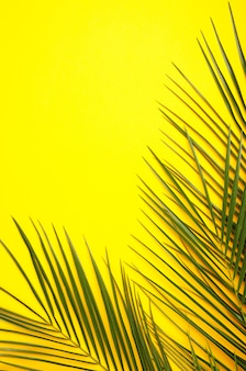 Green leaves of palm tree on yellow background, top view