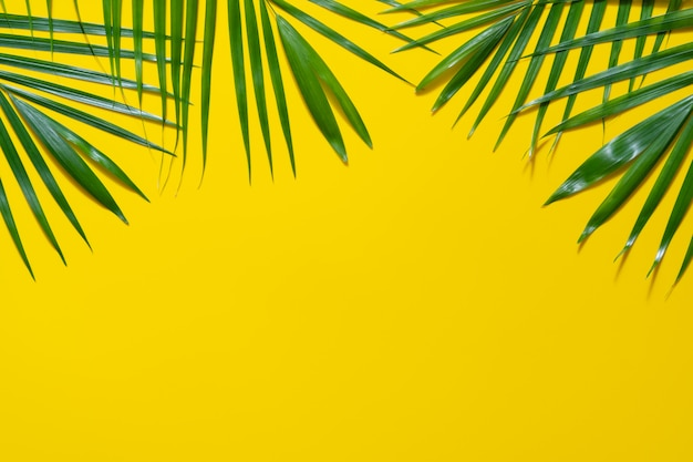 Green leaves of palm tree on yellow background.