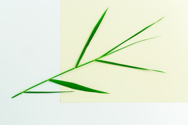 Green leaves on paper