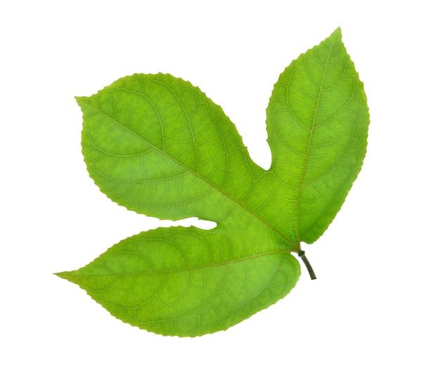 녹색 잎 열정 과일 흰색 배경에 고립