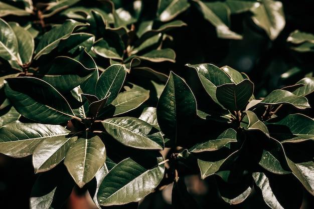 緑の葉パターン背景自然な背景と壁紙