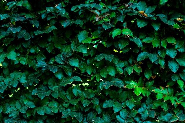 Зеленые листья узор фона, естественный фон и обои