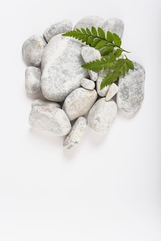 Green leaves on pebbles
