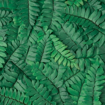 Green leaves perfect for nature concept.