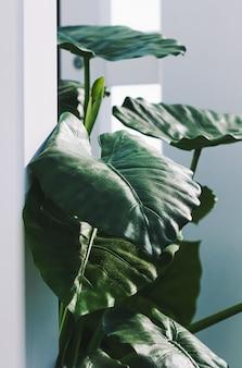 モダンな白いインテリアの緑の葉植物の装飾