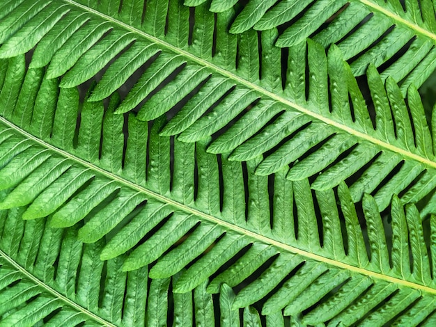 Green leaves of the plant, imitating fir branches closeup.