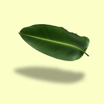Отражение зеленых листьев в тропическом лесу, изолированные на пастельно-желтом фоне