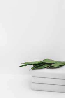 Green leaves on stacked of book against white backdrop
