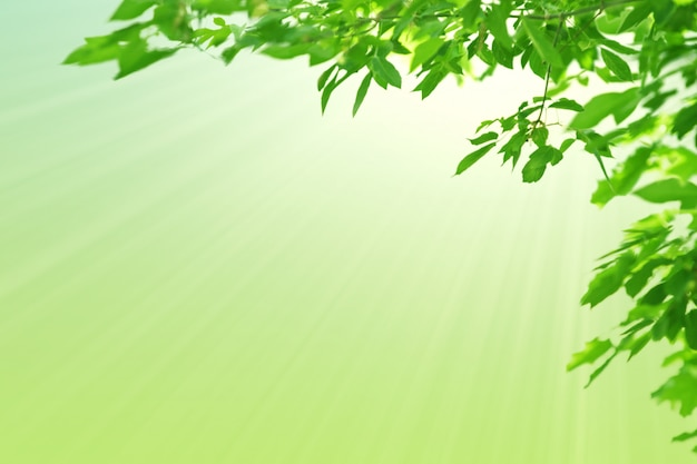 Green leaves and sunshine. natural spring pastel green background.  copy space.