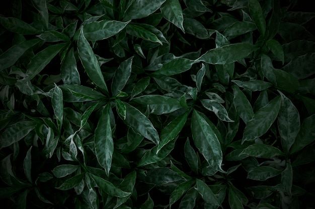 Green leaves texture background nature wallpaper