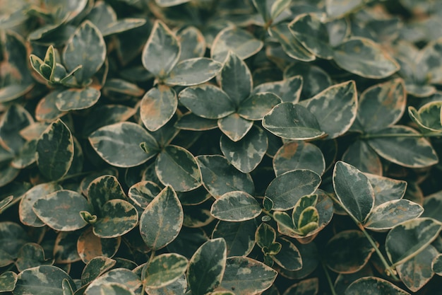 Green leaves texture. spring plant.