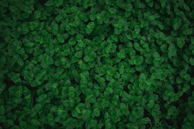 Зеленые листья текстуры фона вид сверху. полный кадр тона тропических темно-зеленых листьев.