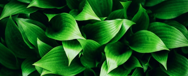 Green leaves texture. tropical leaf background.