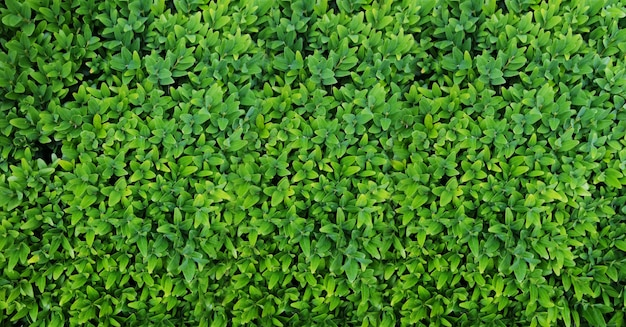 Green leaves top view