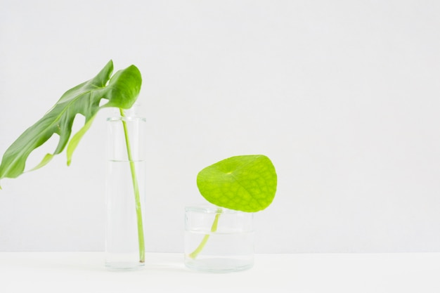 Green leaves in transparent glass vase against white background