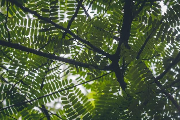 Foglie verdi e rami di albero sopra la testa