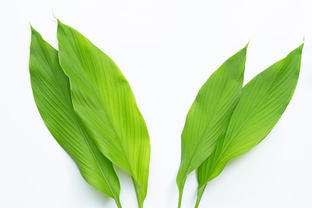Green leaves of turmeric on white.