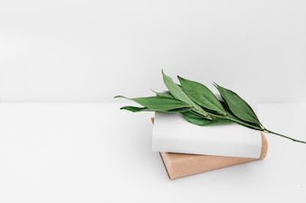 Green leaves twig with two books on white backdrop