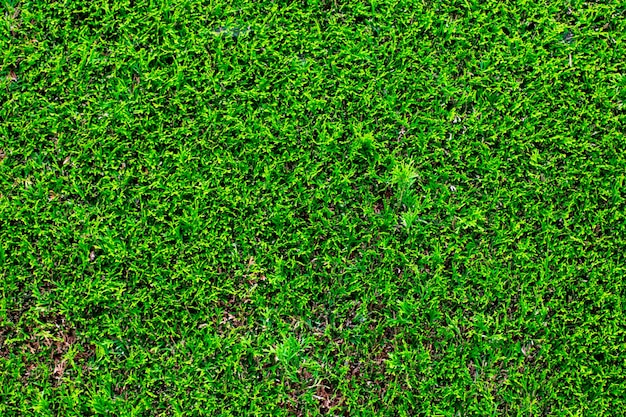 Green leaves wall background, landscape design.