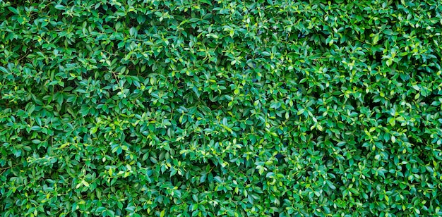 Green leaves wall background, leaf wall nature background