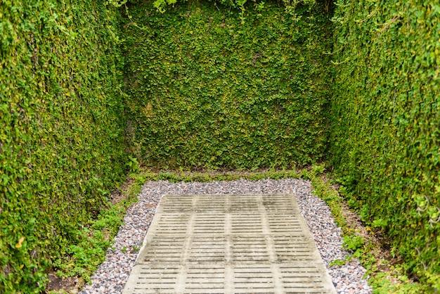 장식 정원에 대한 구체적인 사용 녹색 잎 벽 울타리 프리미엄 사진