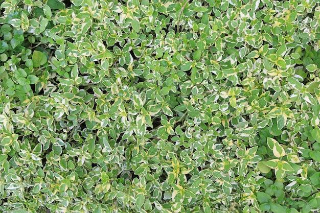 緑の葉の壁フェンス