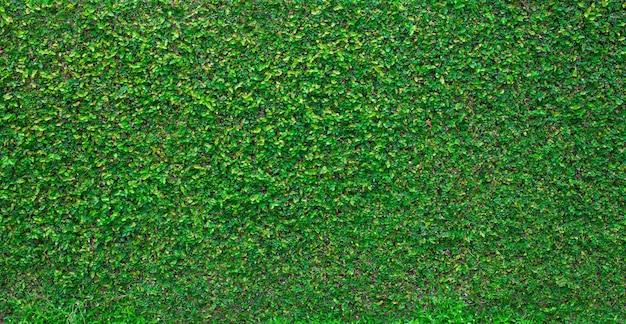 Панорама стены с зелеными листьями для художественных работ и фонового дизайна на тему природы