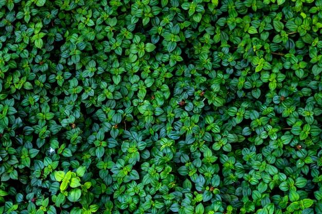 열 대 숲 식물의 녹색 잎 벽 질감