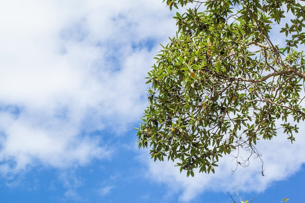Green leaves on white and blue cloud-sky background