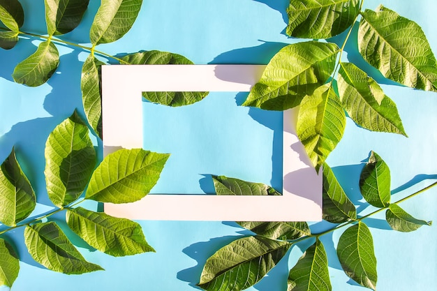 Green leaves and white paper frame on blue pastel background in sunlight. summer card, poster, banner design.