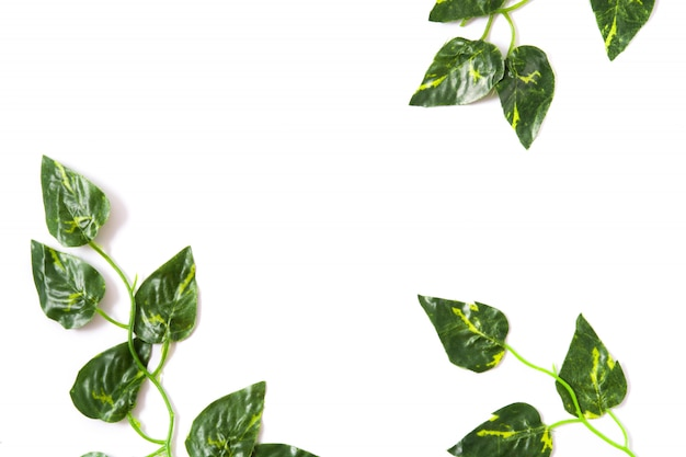 Green leaves on white surface top view tropical concept