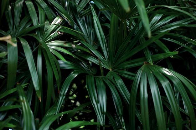 녹색 배경으로 나뭇잎.