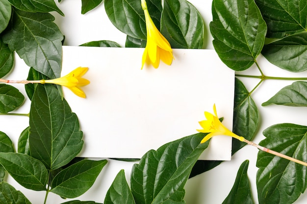 Green leaves with blank card