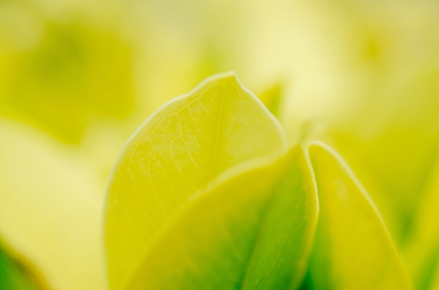Green leaves with a blurred pattern background