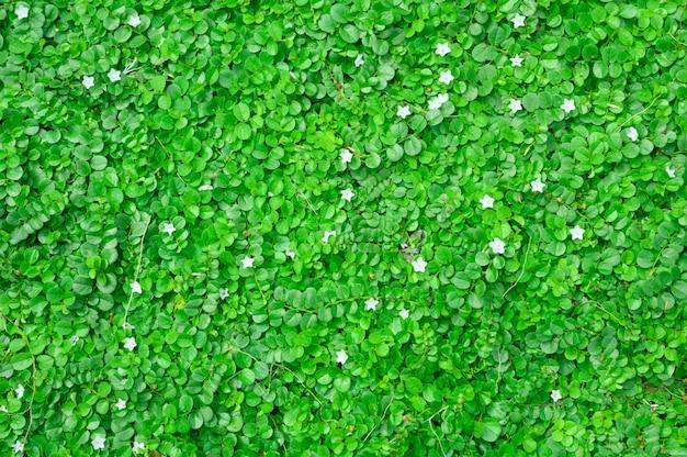 緑の葉と花の上面図