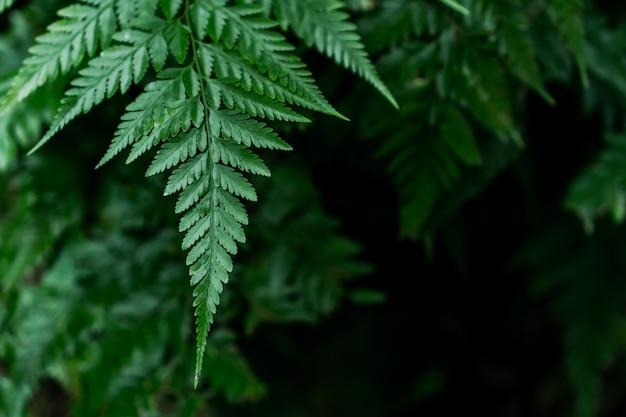 자연 채광이있는 녹색 잎