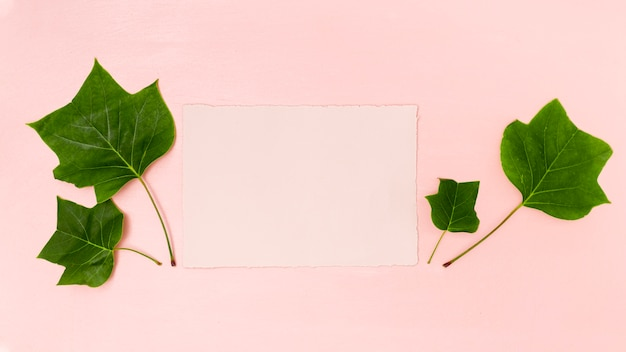 Green leaves with pink copy space flat lay