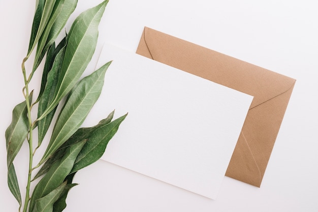 Green leaves with two white and brown envelopes on white background