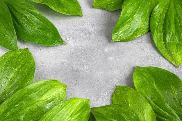 暗い背景に水滴と緑の葉。背景とテクスチャ。スペースをコピーします。